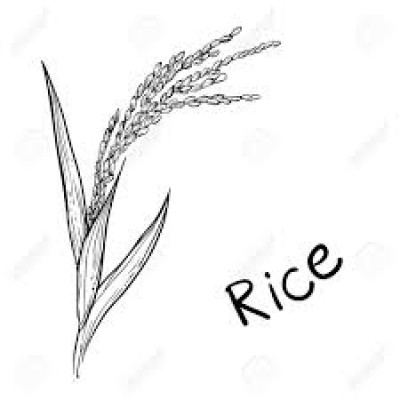 Rice of Bengal